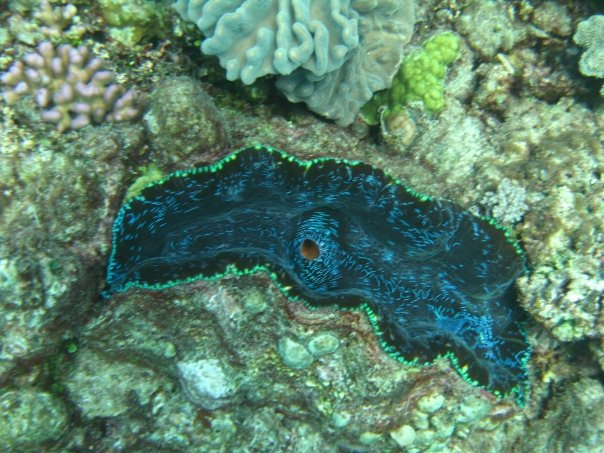 Giant Clam from 2008