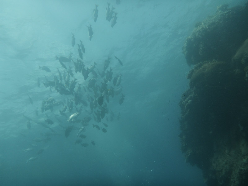 School of Fish at the Bommie