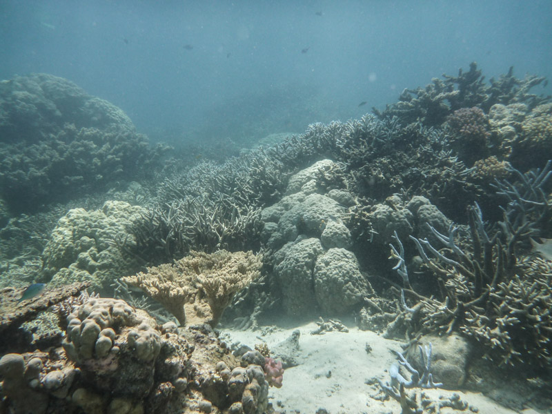 Shallow Coral